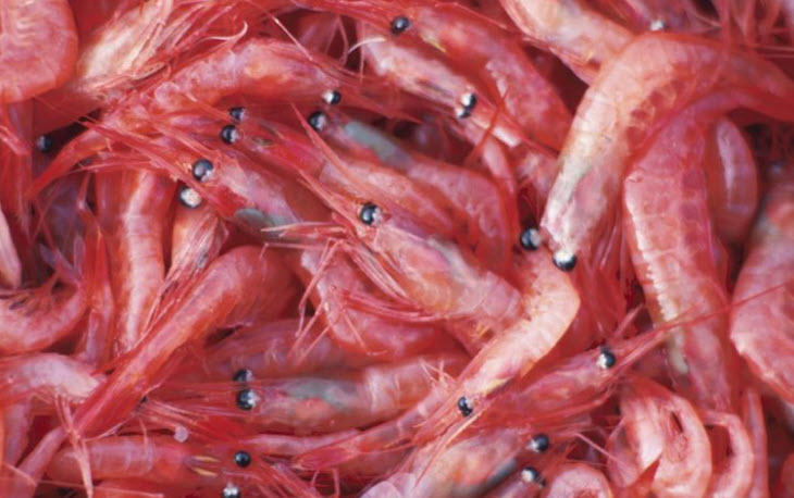 Beware: China announces plan to seven-fold increase Antarctic krill catches